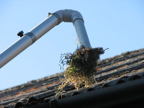 gutter cleaning Woodford